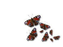 Butterflies. On white background stock photography