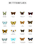 Butterflies. A selection of 16 different types of butterflies. Each named with common name and scientific Stock Photos
