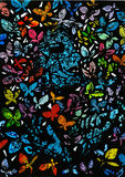 Butterflies. Lots of colorful butterflies and female face against black background Stock Photos