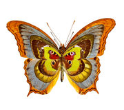 Butterflies abstract collection Royalty Free Stock Photo