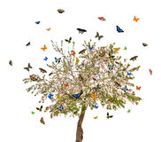 Isolated butterflies and apple tree with flowers. Butterflies and apple tree with flowers isolated on white background Royalty Free Stock Photos