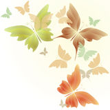 Butterflies in autumn colors Stock Photos