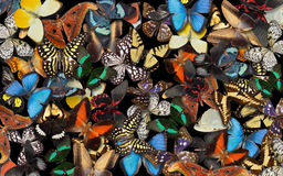 Butterflies. Stock Photos