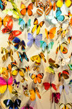 Butterflies background Royalty Free Stock Photo