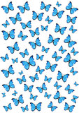 Butterflies Royalty Free Stock Image