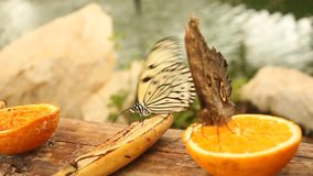 Butterflies on a banana and orange Stock Image