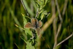 Butterflies. Stock Photos