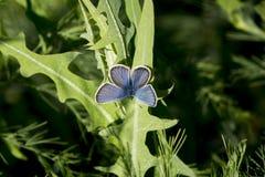 Butterflies. Stock Image