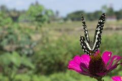 Butterflies in a beautiful flower garden royalty free stock photography