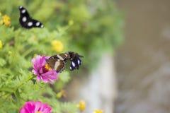 Butterflies in a beautiful flower garden indonesia stock images