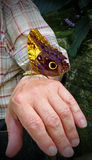 Butterflies stock photography
