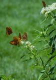 Butterflies Stock Photos
