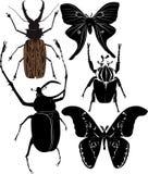 Butterflies beetles Stock Photo