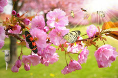 Butterflies on blossom. Blossom covered in illustrated butterflies royalty free stock photography