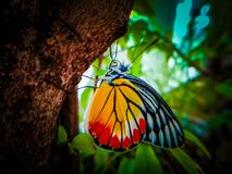 Butterflies on the branches very beautiful colors .