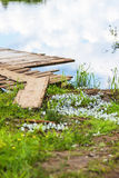Butterflies are cabbage butterflies on the Bank of the river Mologa. A flock of butterflies on the shore Stock Image