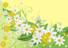 Butterflies and camomiles. Yellow and white camomiles on green also it is light a yellow background with butterflies Stock Photography
