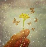 Butterflies Charmer Stock Photos