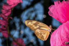 Butterflies  in Christmas day Royalty Free Stock Photos