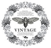 Butterflies, cicada, insects, baroque Rose flowers. Vintage frame card. Wallpaper. Vector Illustration.  Royalty Free Stock Images
