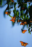 Butterflies circling Royalty Free Stock Image