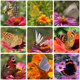 Butterflies. Collage with nine kinds of butterflies Stock Images