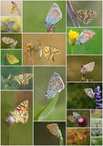 Butterflies Collage Stock Photos