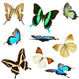 Butterflies collection Royalty Free Stock Photography