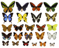 Butterflies collection. On white background Stock Photos