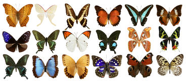 Butterflies collection colorful isolated on white Stock Photos