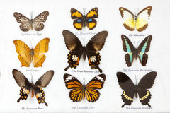 Butterflies collection Royalty Free Stock Photo