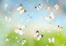 Butterflies 3D Royalty Free Stock Images
