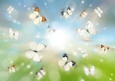 Butterflies 3D Stock Images