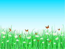 Butterflies and daisies Stock Image
