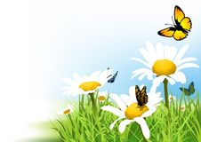 Butterflies and Daisy Stock Image