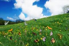 Butterflies in a dandelion meadow. Royalty Free Stock Photos