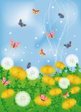 Butterflies and dandelions,  Stock Image