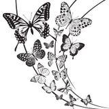 Butterflies design. Monochrome butterflies design on floral background Stock Photos