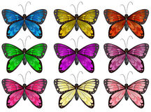 Butterflies in different colors Stock Photos