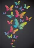 Butterflies drawn in chalk