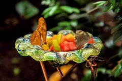 Butterflies eating Royalty Free Stock Photo