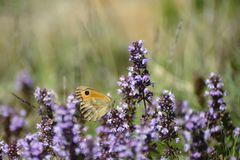 Butterflies eating together on the flowers Royalty Free Stock Photos