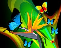 Butterflies expressing romance Stock Image