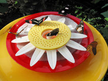 Butterflies Feeding Stock Photography