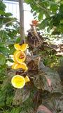 Butterflies feeding on fruit Stock Photos