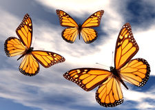 Butterflies in Flight Stock Photography