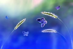 Butterflies in flight against a background of wild nature in blue tones. Artistic image Stock Images