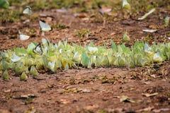 Butterflies flock Stock Image