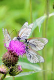 Butterflies. Flower. Stock Photos