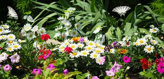 Butterflies on a flower bed royalty free stock photo